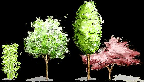 Hirmer Bäume